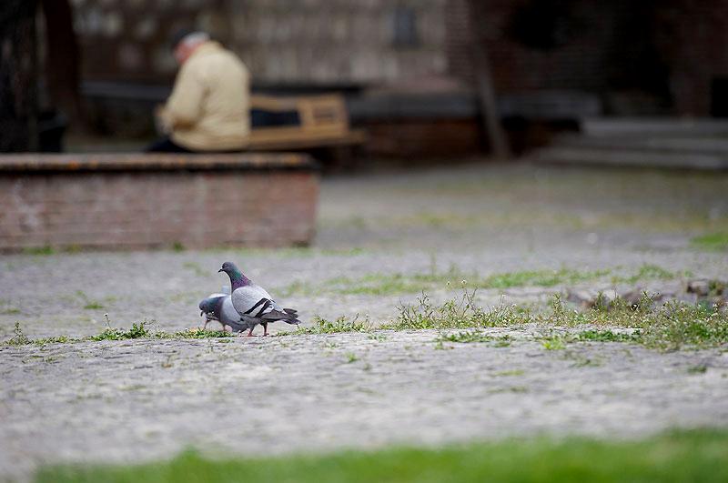 старый Тбилиси, жители, птицы