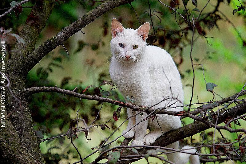 кошка, животные