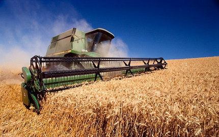 пшеница, сбор урожая