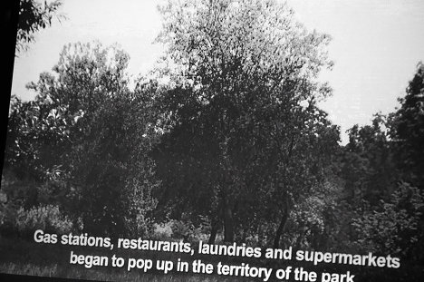 лесопарк, лес, природа