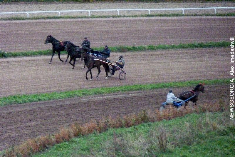 лошади, ипподром