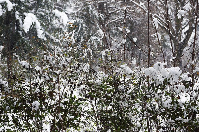 зима снегопад