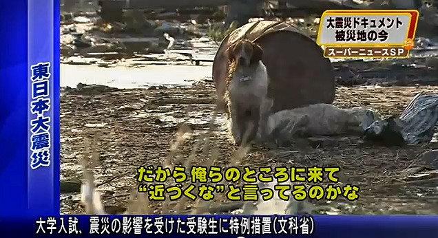 собачья верность Япония