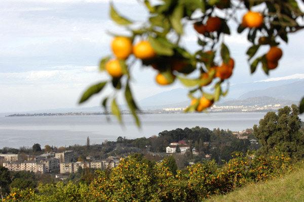 Абхазия Сухуми мандарины