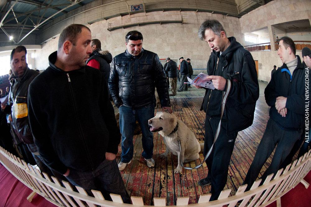кавказские овчарки выставка