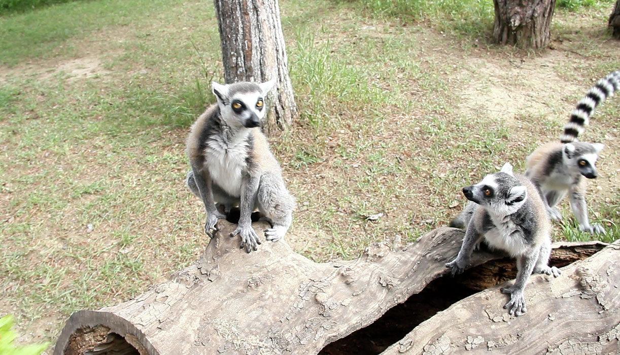 Тбилисский зоопарк