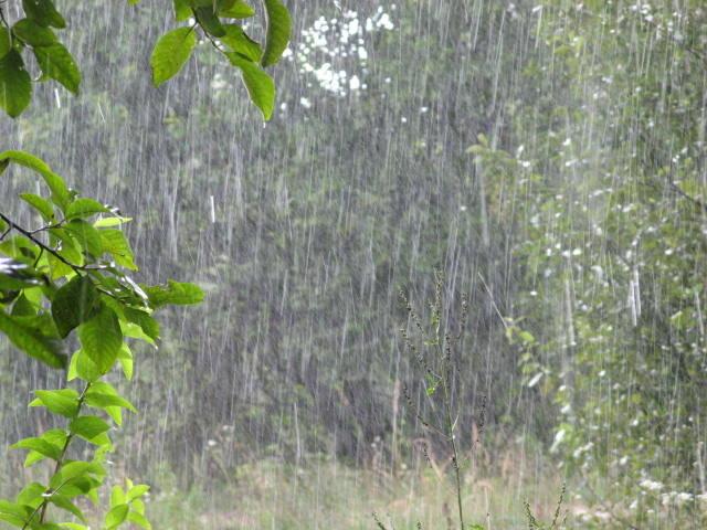 дождь, стихия, ливень, погода