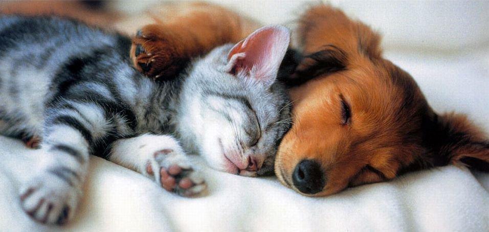 собаки кошки домашние животные