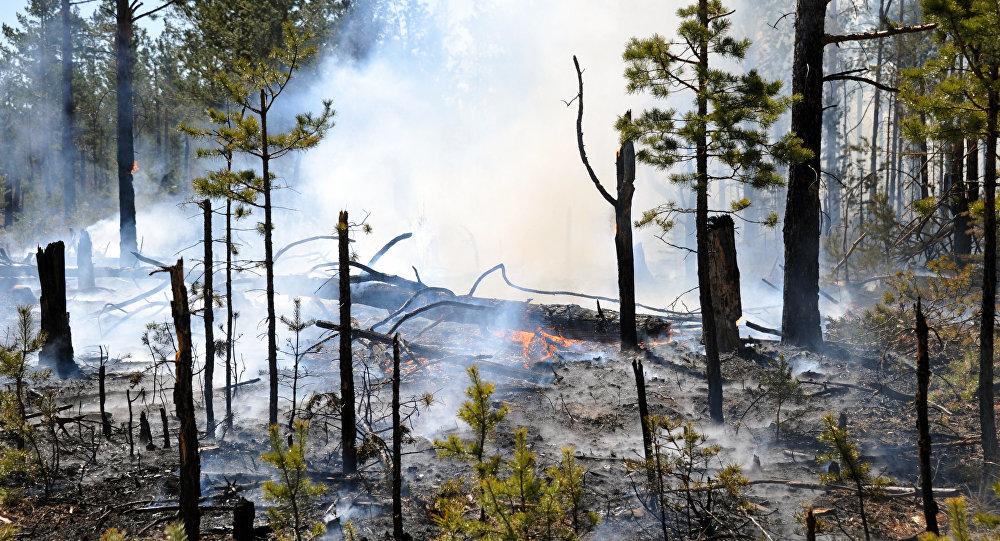Борьба с лесными пожарами в Забайкальском крае