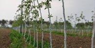 საქართველოში ბაღების განაშენიანება გრძელდება