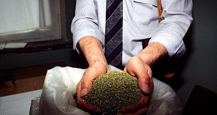 Изъятие марихуаны в наркопритоне