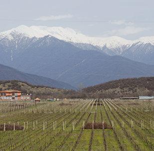 Кахетия - родина грузинского вина