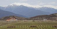 კახეთი - ქართული ღვინის სამშობლო