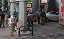 Животные разбежались из зоопарка после наводнения