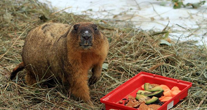 День Сурка в нижегородском зоопарке Лимпопо