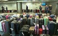 Дворкович проверил, как сортируют доставленный из Египта багаж россиян