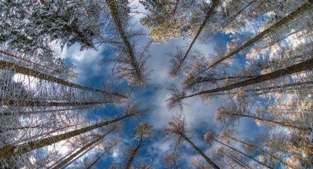 ტყე ზამთარში