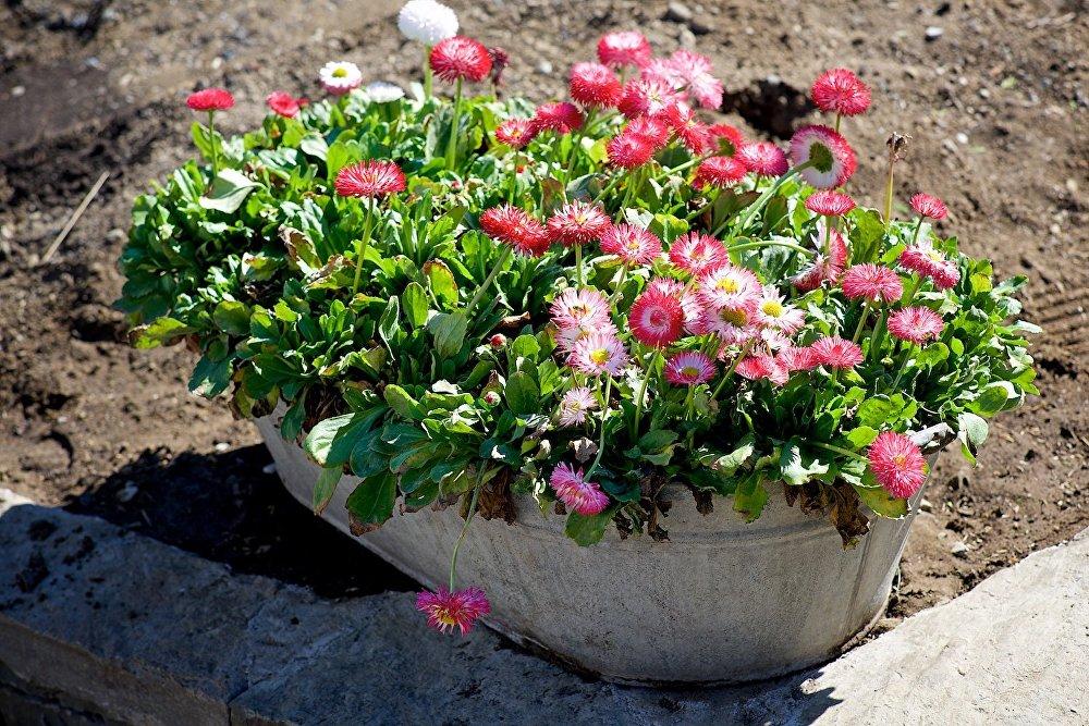 Цветок гардения садовая