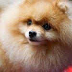 Спонсором проведения Международной выставки собак на этот раз выступила мэрия Тбилиси, за что организаторы выразили ей большую благодарность.