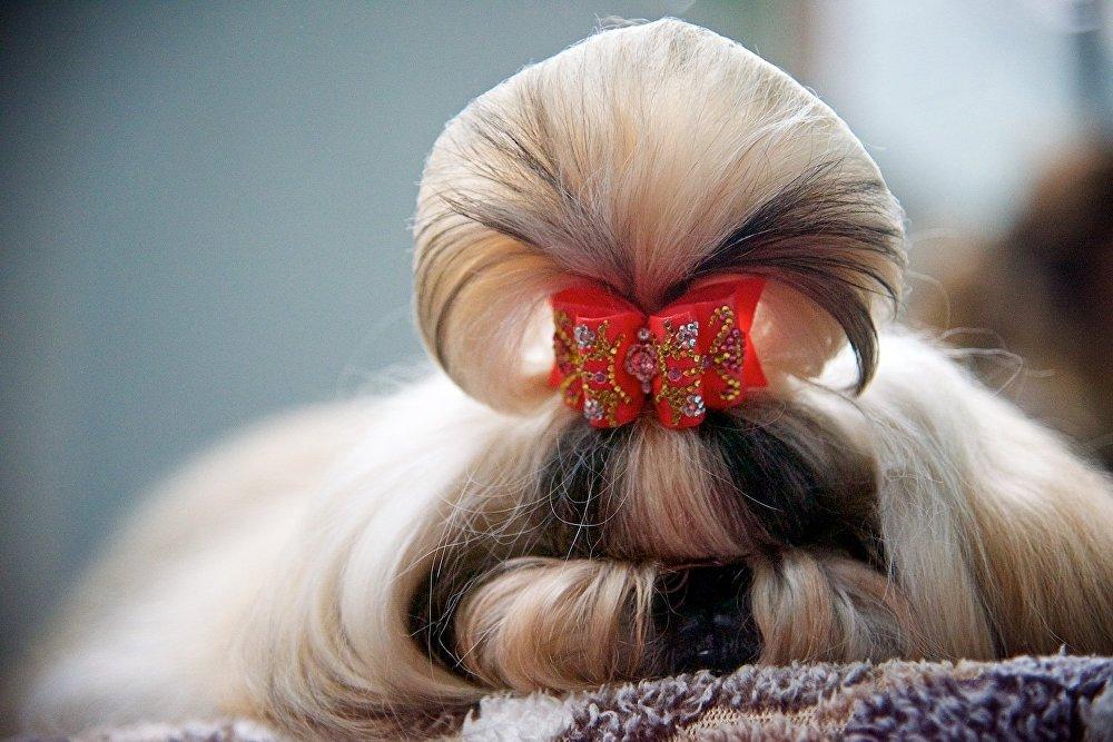 На Международной выставке в Тбилиси было представлено много декоративных пород собак.