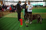 На монопородной выставке собак Tarti 2016, день кавказских овчарок