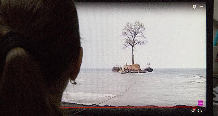 Девушка смотрит на компьютере видео о перевозке дерева