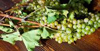 Рвели - сбор винограда в регионе Кахети