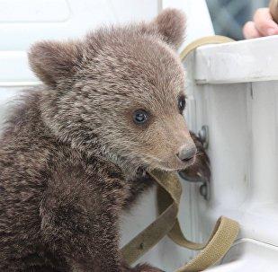 Спасенный медвежонок