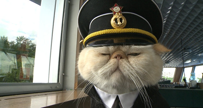 Хвостатый экипаж - коты в форме служат на корабле и ходят в море
