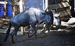 Доставка новых животных из Европы в Тбилисский зоопарк