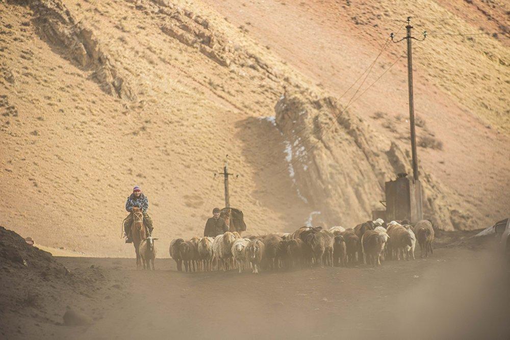Чабаны во время перегона овец. Фотография снята во время командировки нашего фотографа в регионы