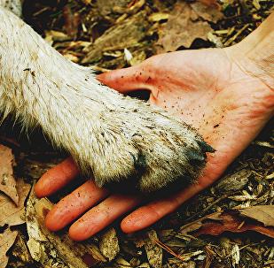 ადამიანი და ცხოველი — ხელი ხელს
