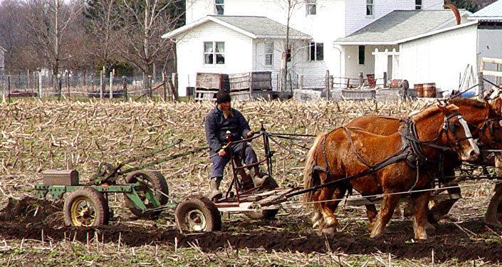 Амиш-фермер
