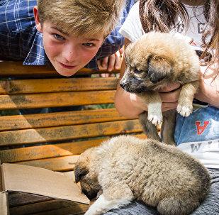 Раздача домашних животных в парке Ваке