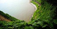 Вид на побережье Аджарии с территории Ботанического сада