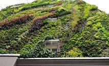 Озелененная стена дома