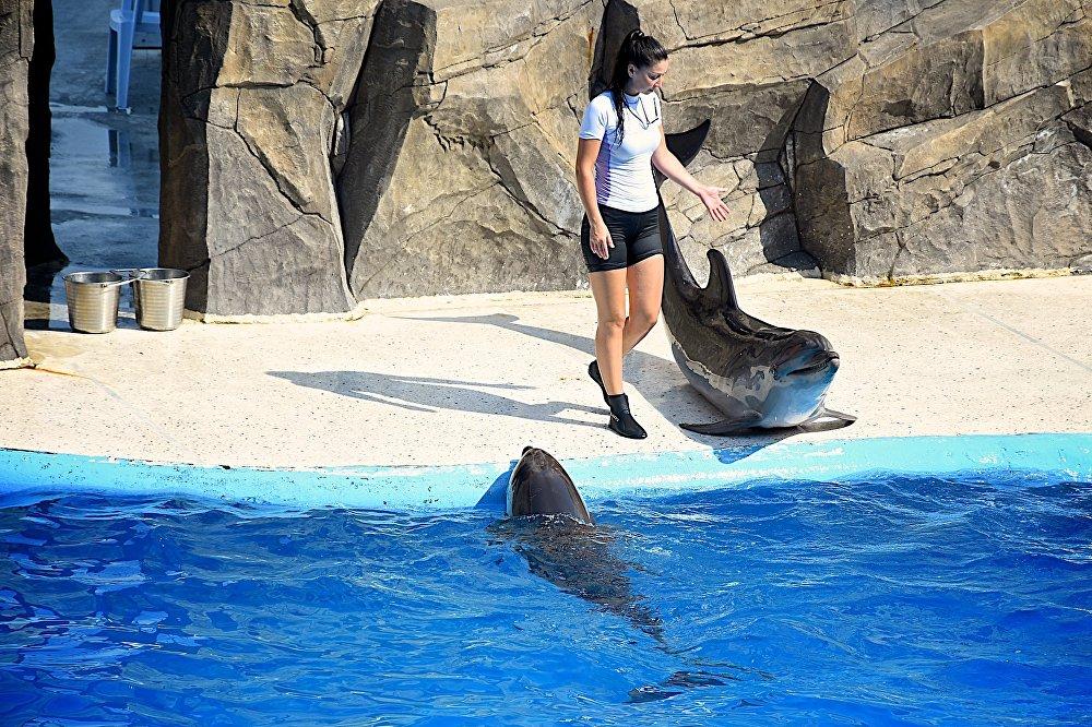 сколько стоит вход в дельфинарий в батуми производители термобелья