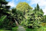 ბათუმის ბოტანიკური ბაღი