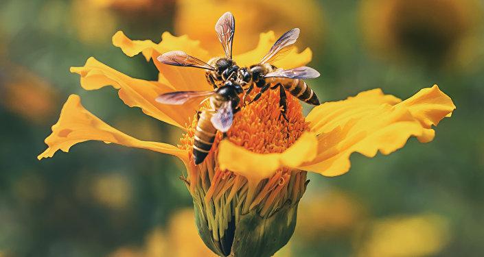 ფუტკარი ყვავილზე