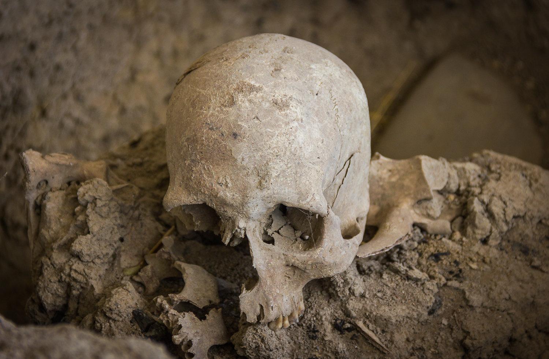 Череп, найденный в предположительно ритуальном помещении