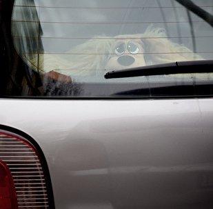 ავტომობილი