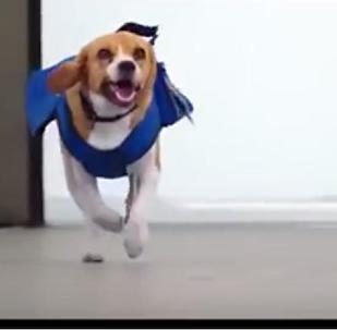 ამსტერდამის თანამშრომელი ძაღლი შერლოკი