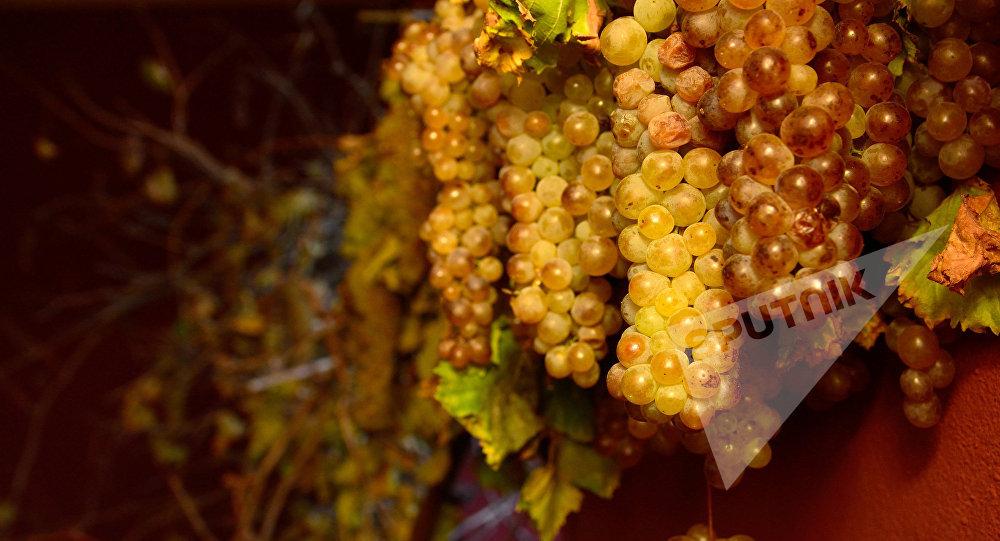 Сбор и переработка винограда