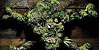 ელნვიკის შხამიან მცენარეთა ბაღი