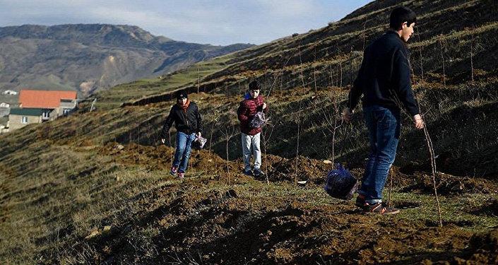 Посадка саженцев миндальных деревьев