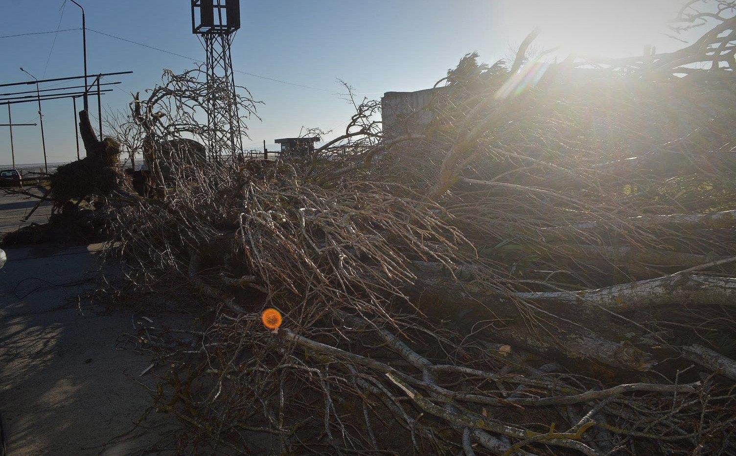 Вгрузинском Поти сильный ветер вырвал деревья иобесточил часть города