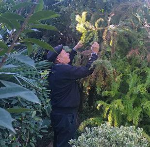 Азербайджанец вырастил миллионы растений на 20 сотках