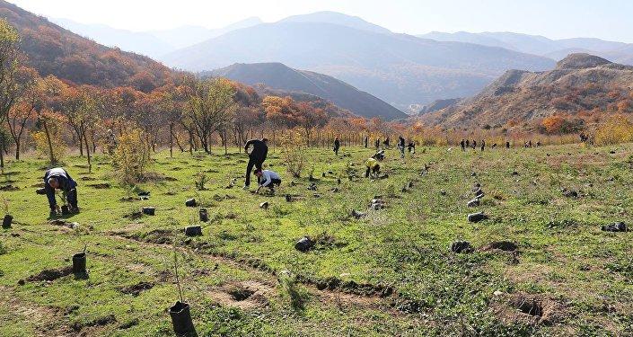 Проект озеленения департамента автомобильных дорог министерства регионального развития и инфраструктуры Грузии