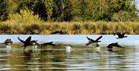Колхидский национальный парк