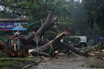 Рабочие пилят дерево, упавшее во время шторма